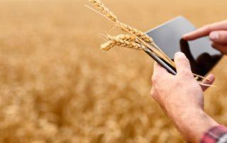 Männerhände am Tablet vor einem Getreidefeld