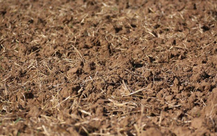 Déchaumage - Résidus de récolte travaillés