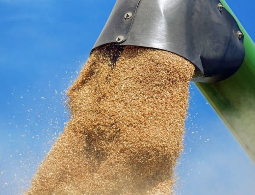 Agricultural market – instability of fluctuating grain prices