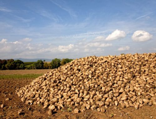 Build the foundations for a successful sugar beet harvest with the sugar beet sowing
