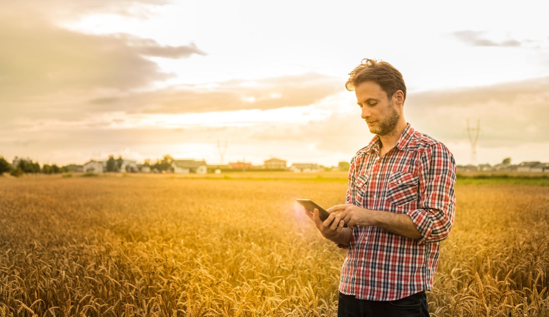 Agriculteur sur sa tablette devant un un champ de céréales.