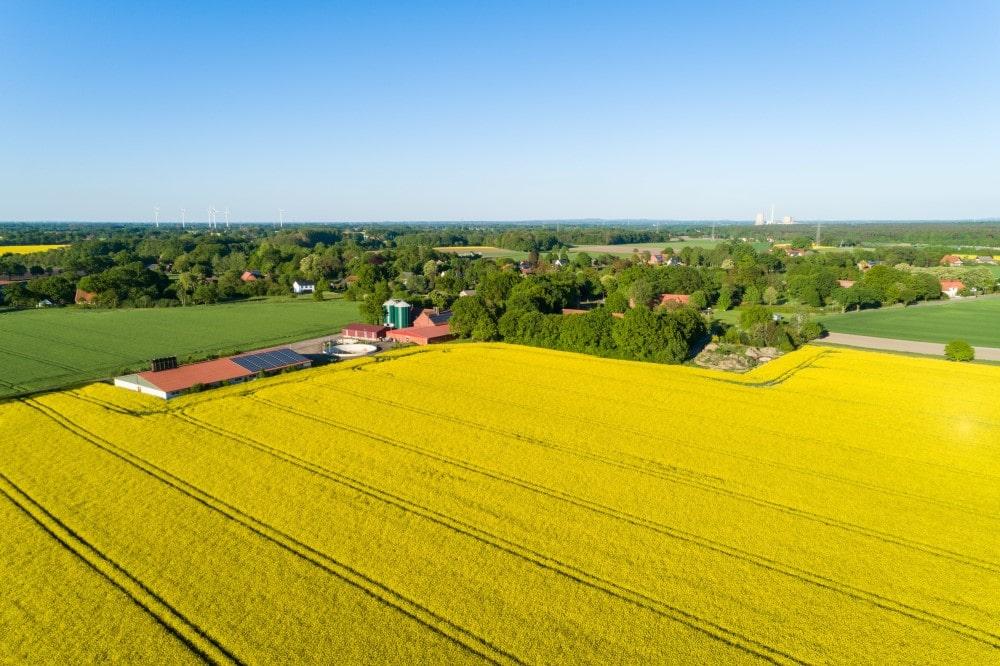 Rapsfeld in Deutschland aus der Luft.