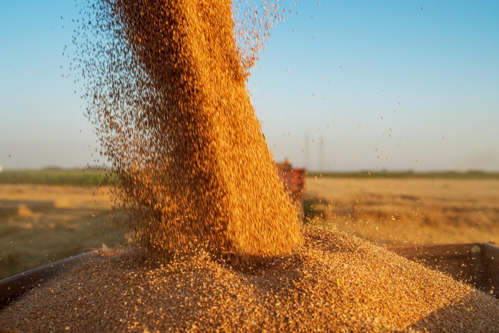 Qualität der Ernte