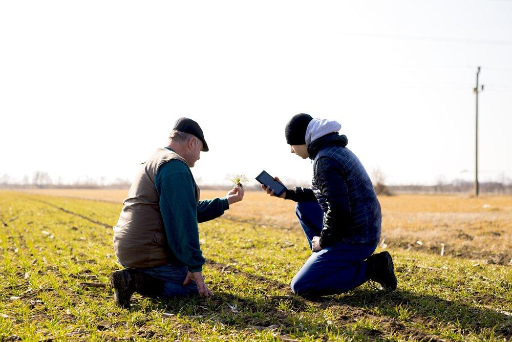 Zwei Männer mit Handy auf dem Feld, kontrollieren Pflanzen.