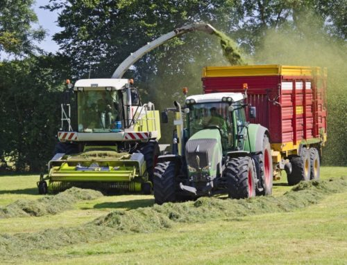 First cut in grassland: Silage management and feed quality