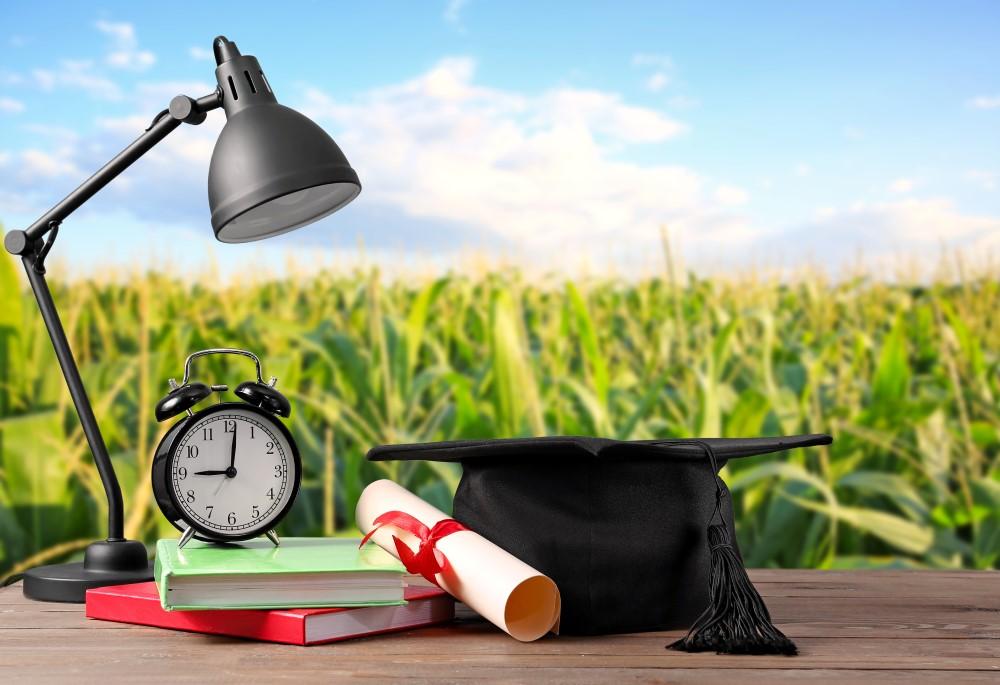 Atrybuty ucznia, na tle pola kukurydzy, przypominające, iż przyszedł czas na naukę i zabawę jednocześnie